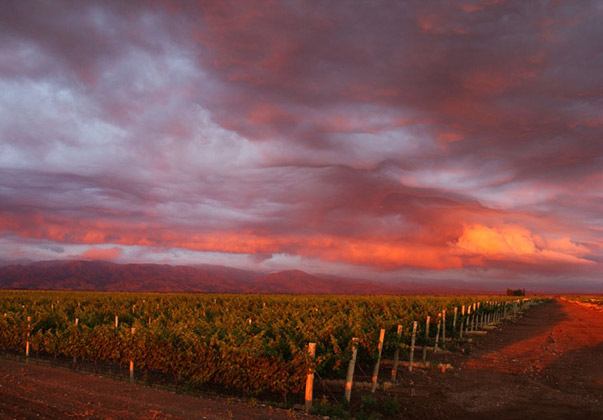 Argento Wine Company Vineyard by  - Vineyard Country: Argentina - Vineyard Region: Mendoza