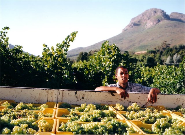 Dornier Vineyard by  - Vineyard Country: South Africa - Vineyard Region: Stellenbosch