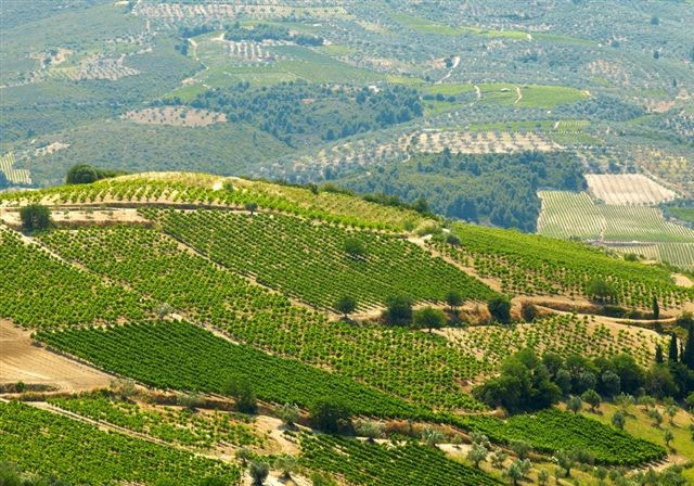 Stamata winnery Vineyard by Sallas family - Vineyard Country: Greece - Vineyard Region: Central Greece