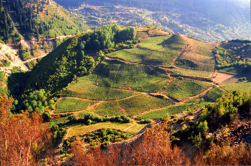 Katogi & Strofilia S.A. Vineyard in Metsovo, Greece