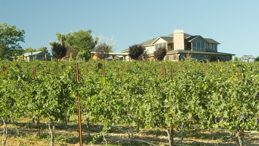 Snyder Winery Vineyard in Buhl, United States