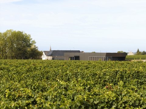 Baudry-Dutour  Vineyard by  - Vineyard Country: France - Vineyard Region: Loire