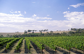 Plantagenet Wines Vineyard by  - Vineyard Country: Australia - Vineyard Region: Western Australia