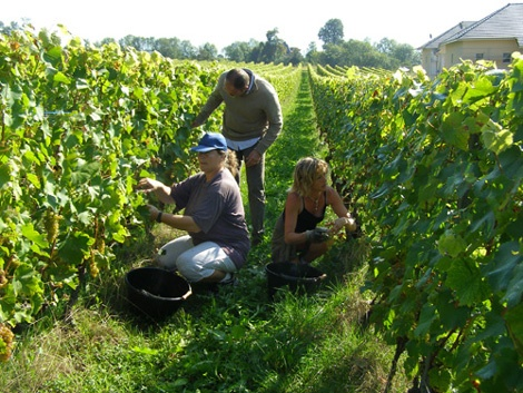 Domaine Bouvet Vineyard by Delphine et Fréderic GARANJOUD - Vineyard Country: France - Vineyard Region: Savoie