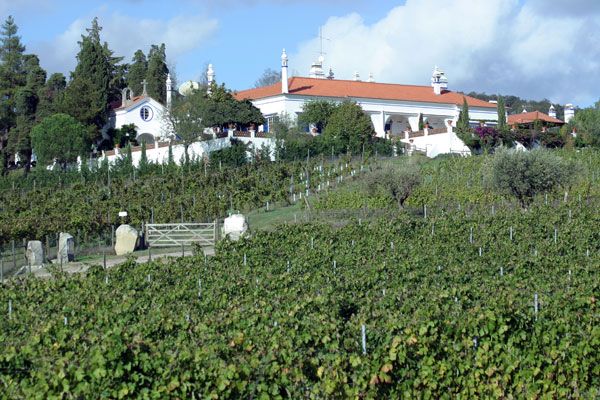Soc. Agr. D.Diniz - Monte da Ravasqueira Vineyard in Alentejo, Portugal